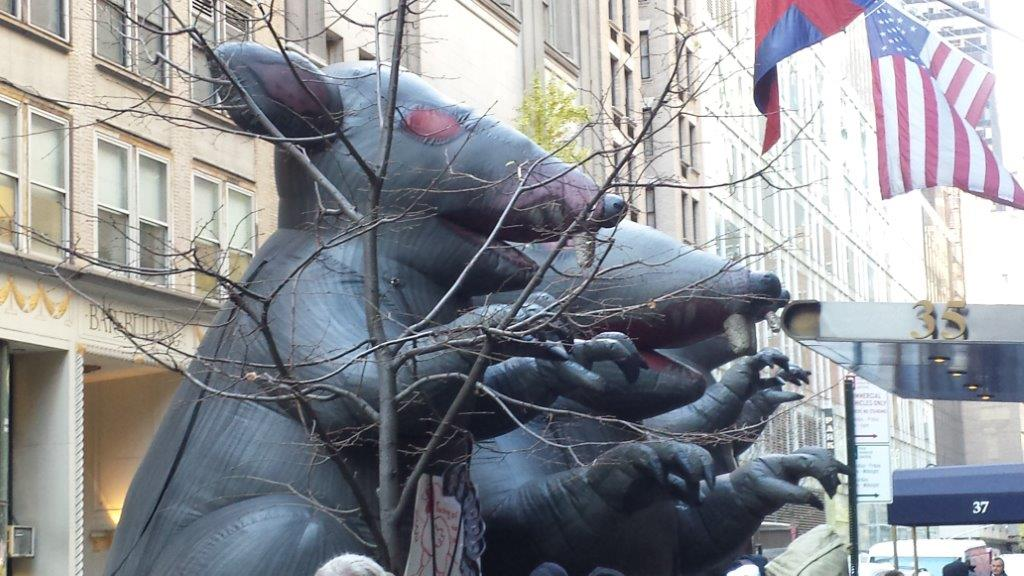 Three blown up rats